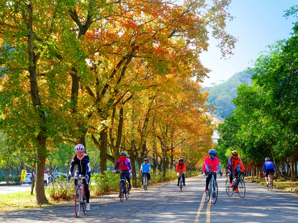 Biking alongside maple trees in Shimen