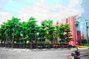 平鎮區公園-金星社區公園圖片(共兩張)