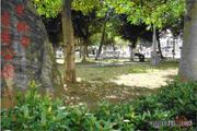 平鎮區公園-宋屋公園圖片(共三張)