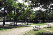 平鎮區公園-新寶公園圖片(共三張)