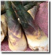 綠竹筍示意圖、共3張圖片