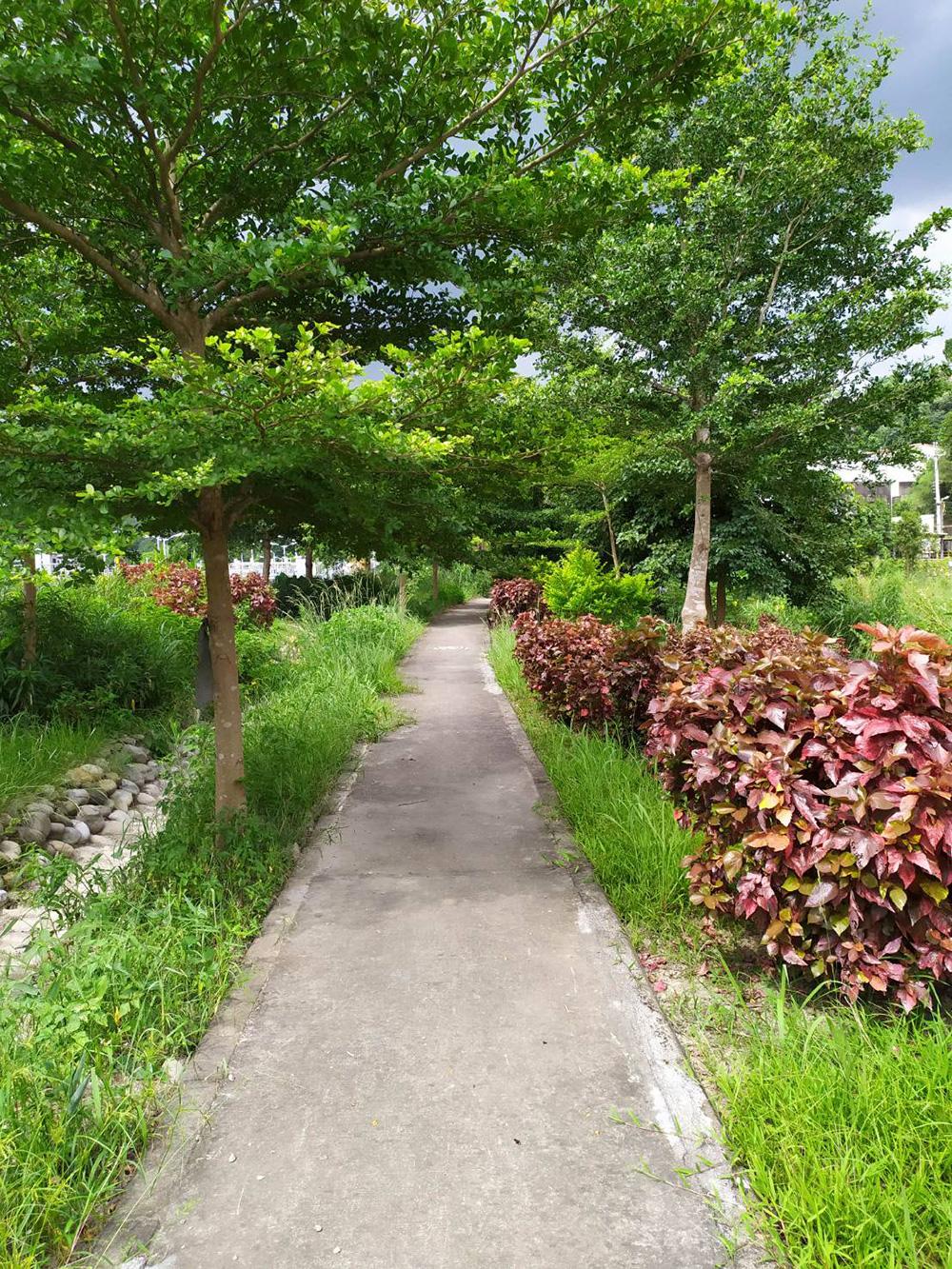 大溪水資源中心設有景觀步道,綠意盎然
