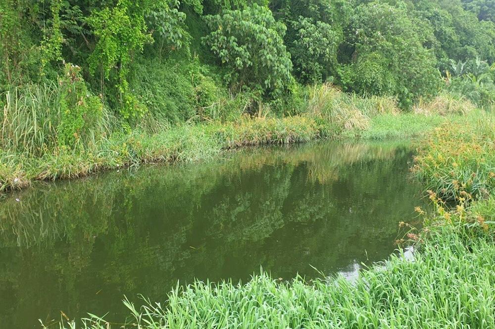 月眉濕地排水自然淨化系統:透過植物與生物淨化污水達到削減污染的方式