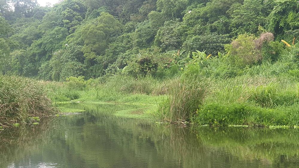 月眉濕地排水自然淨化系統:別小看一株株漂浮在水面上的植物,都是削減污染的小尖兵。