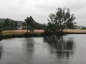 圖:沿途社區營造花海照片【另開新視窗】