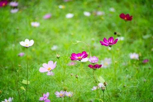 展區花朵盛開貌【另開新視窗】