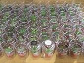10701-八德區-分享愛_市集內消費滿額送多肉植物【另開新視窗】