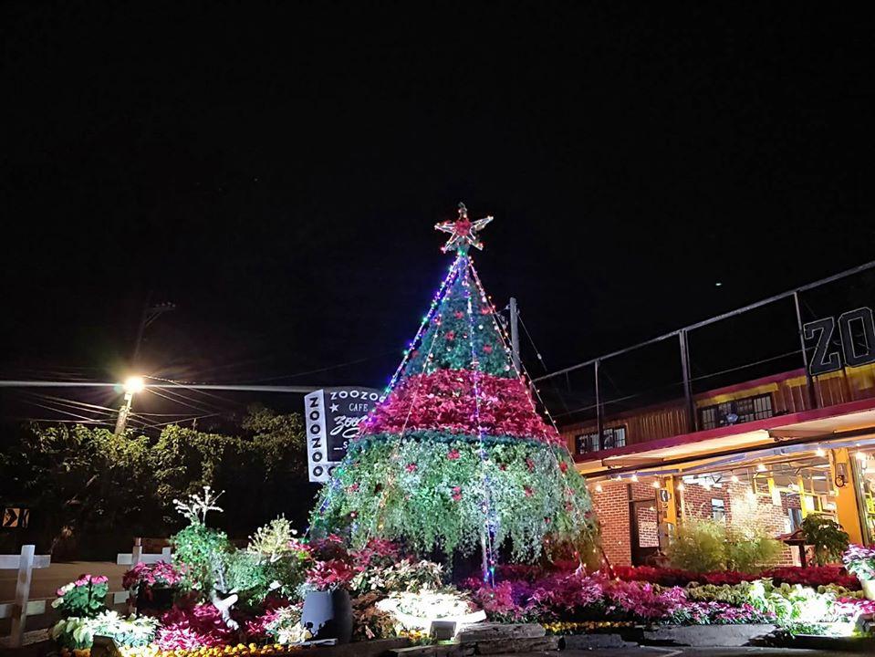 1081214-復興區-桃園山城聖誕紅花節聖誕樹造景