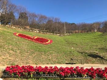 2019桃園山城聖誕紅花節