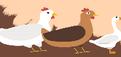 禽流感專區