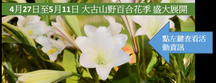 2019大古山野百合花季