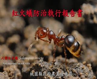 認識紅火蟻