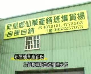 仙草產銷班(台語)(2008拍攝)