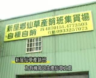 仙草產銷班(國語)(2008拍攝)